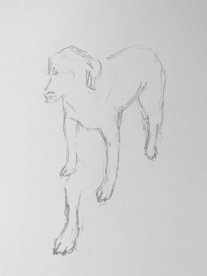 Preparatory drawing - dog 1