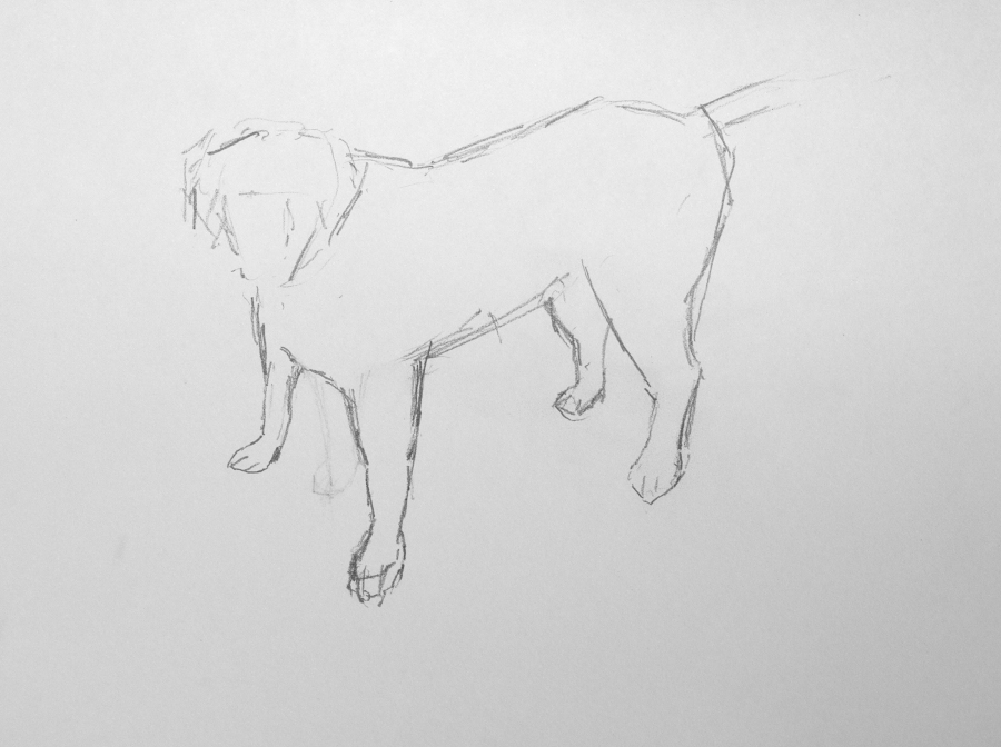 Preparatory drawing - dog 2
